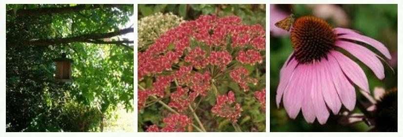fleur et nid dans l'arbre l'automne